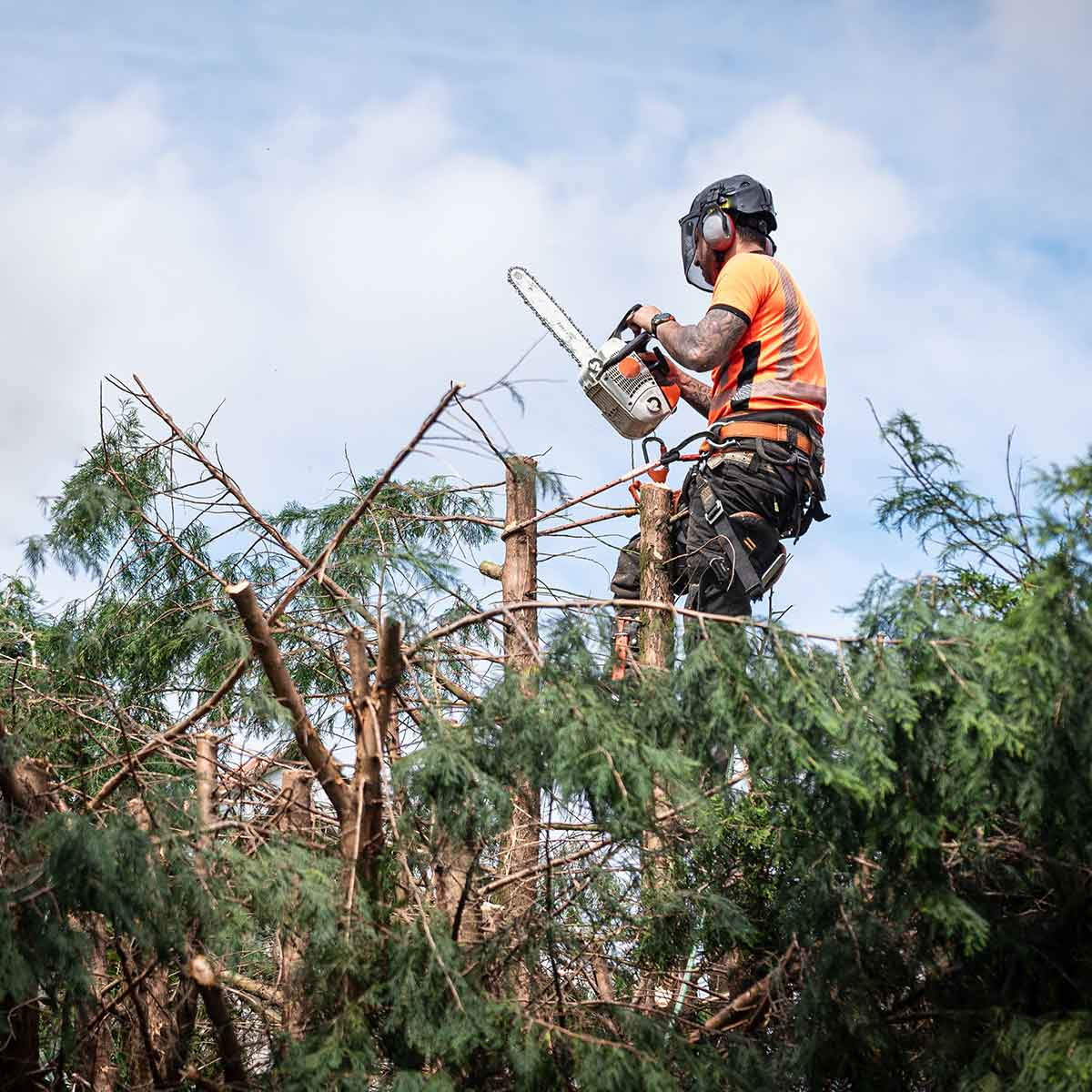 Lumber Jack carrying out tree suegery for Arboricultural Excellence Tree Surgeons