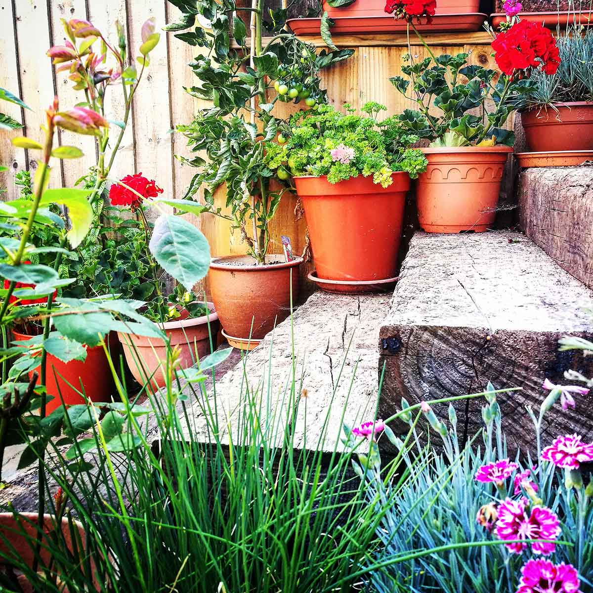 Wooden steps with flower pots arranged on them